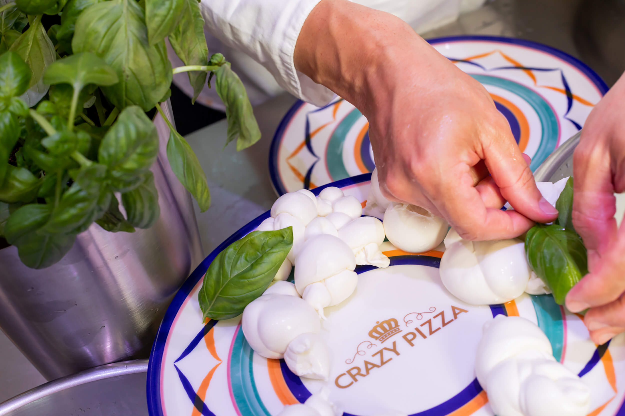 Hands garnishing a plate with basil and fresh mozzarella knots.